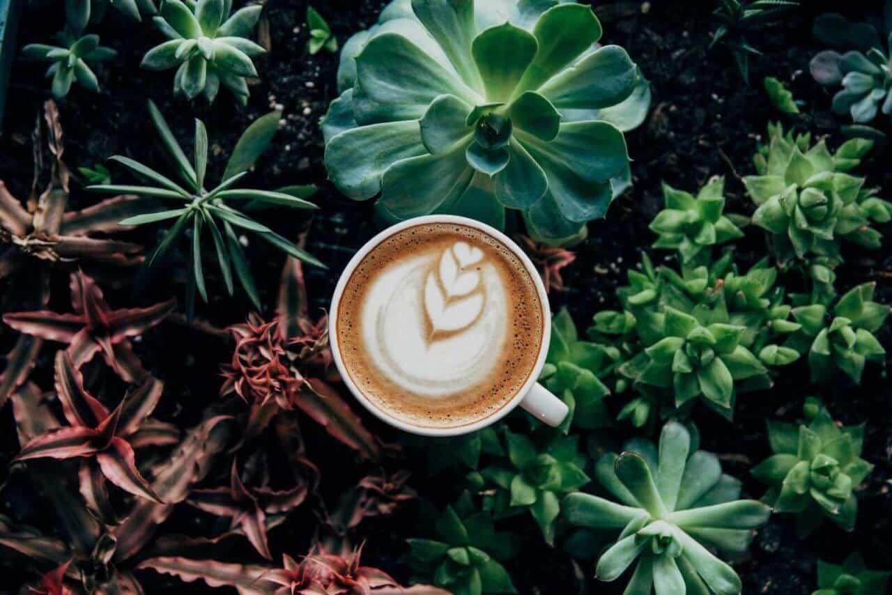 Café de qualité en entreprise pour vos collaborateurs, frais, et écologique