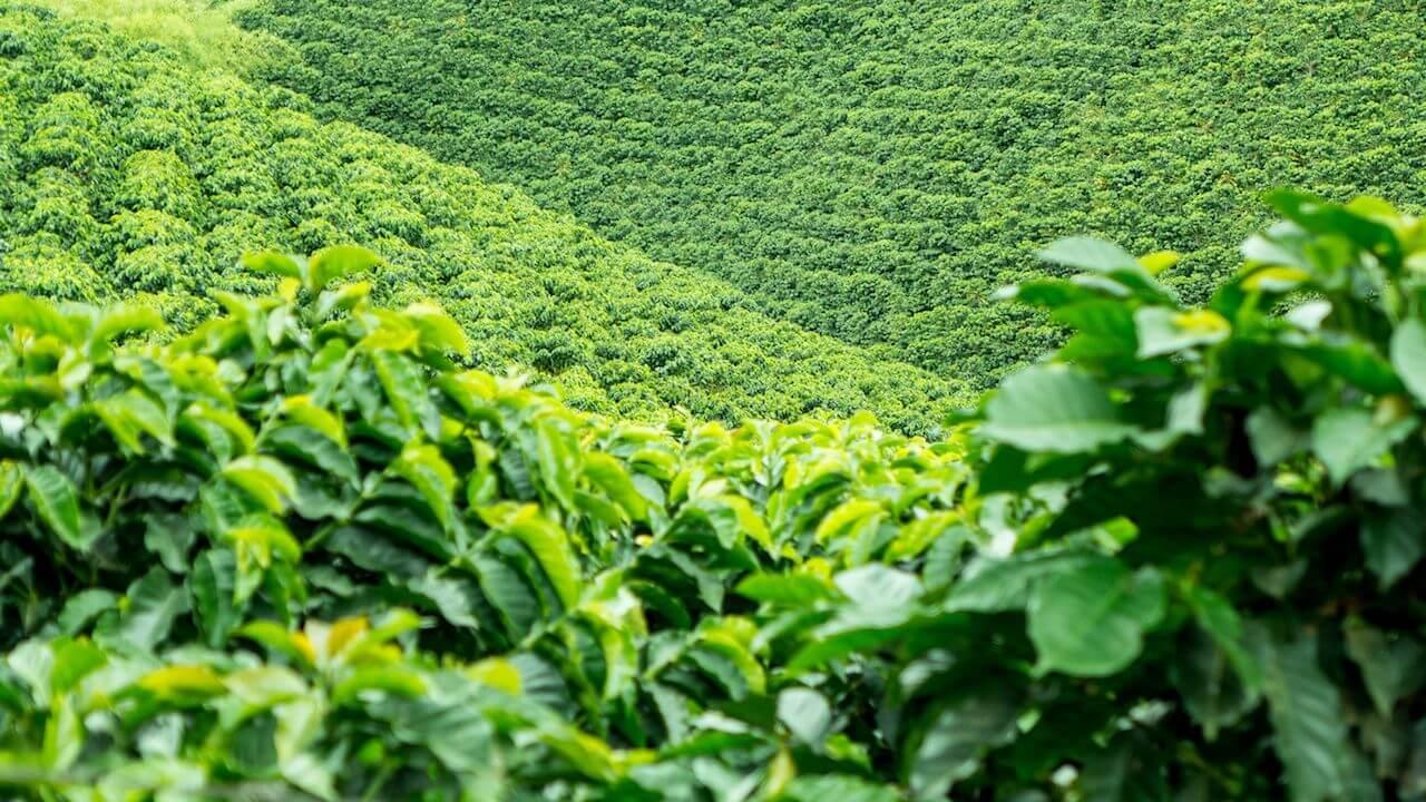Solution café entreprise ecologique qui ne necessite pas de capsules jetables pour le boire. Le recyclage des capsules consomme énormément d'energie